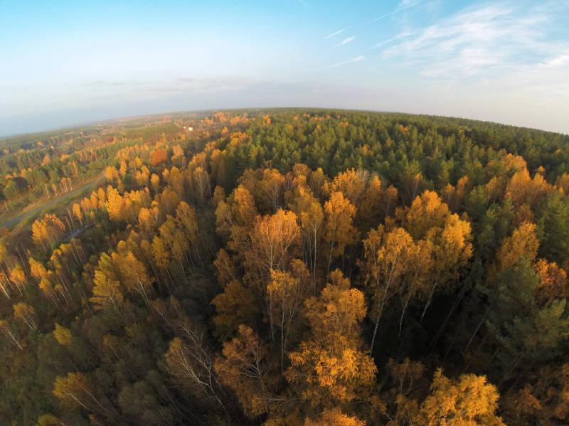 Ne visi medžiai geltoni...