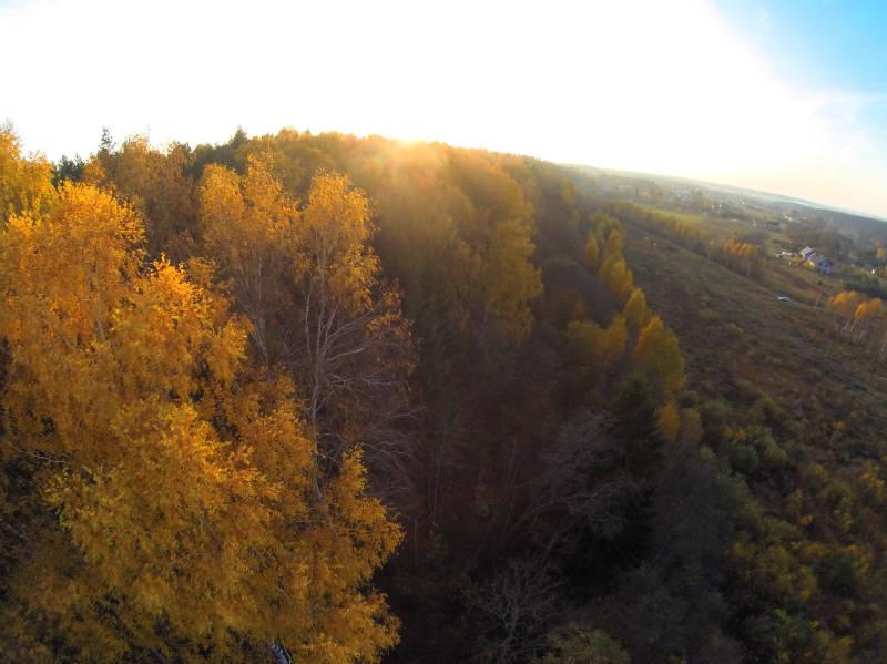 Medžių spalvos...