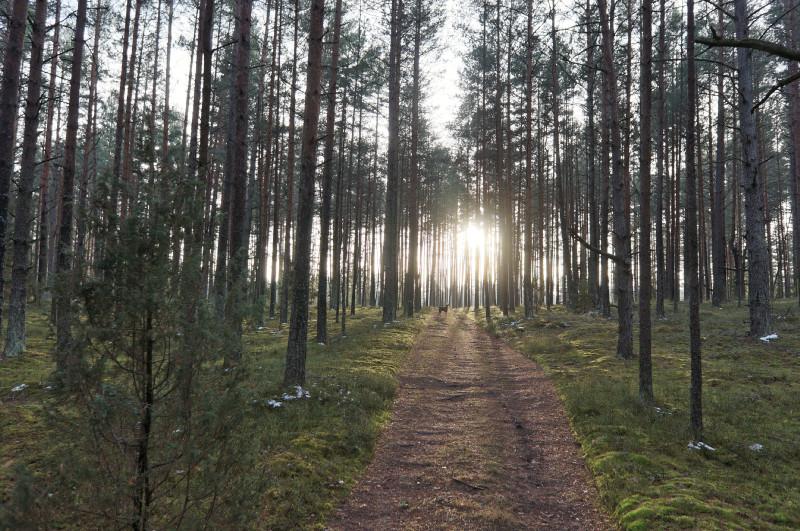 Miškas, šuo, ruduo